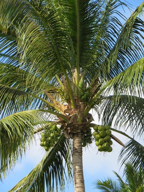 palm-1003926_960_720